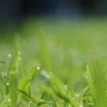 Клубнично-малиновая шарлотка
