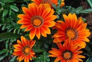 Как правильно посадить цветы на даче?
