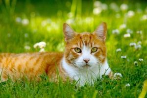 """Предметы первой """"кошачьей"""" необходимости"""